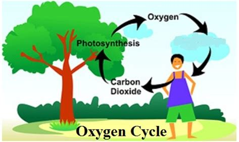 The Carbon Cycle Essay Examples Kibin