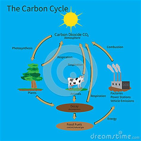 Human Impacts on the Carbon, Nitrogen and Phosphorus